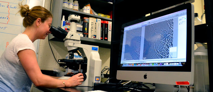 Graduate Student looks into a microscope