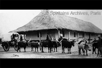 Ganda Mission, Angola 1929. Ox drawn wagon.