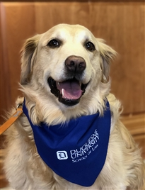 therapy dog_pet bandana