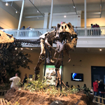 T-Rex at Carnegie Museum of Natural History